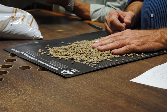 Coffee beans being sorted at a farm in Brazil.