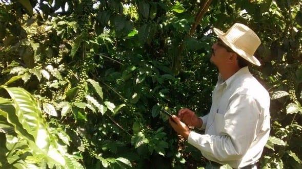 coffee producer