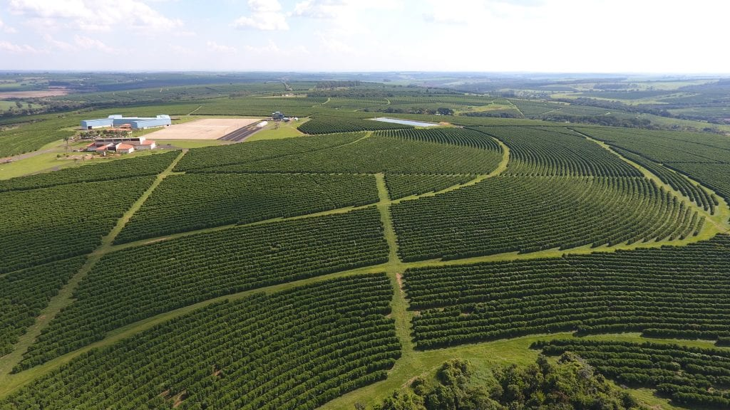 View from above of a coffee crop