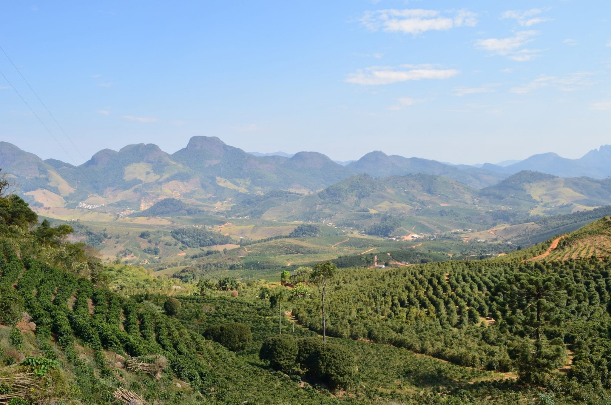 View from a brazilian coffee farm