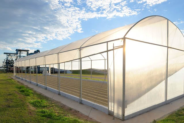parabolic greenhouse with drying coffee beans inside