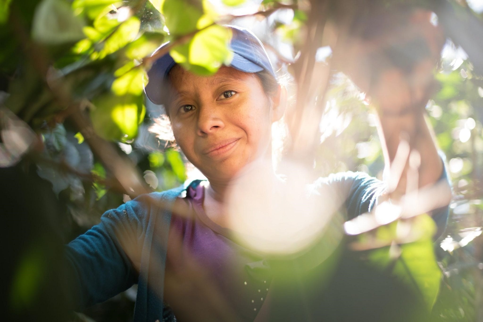 woman coffee picker in a coffee tree