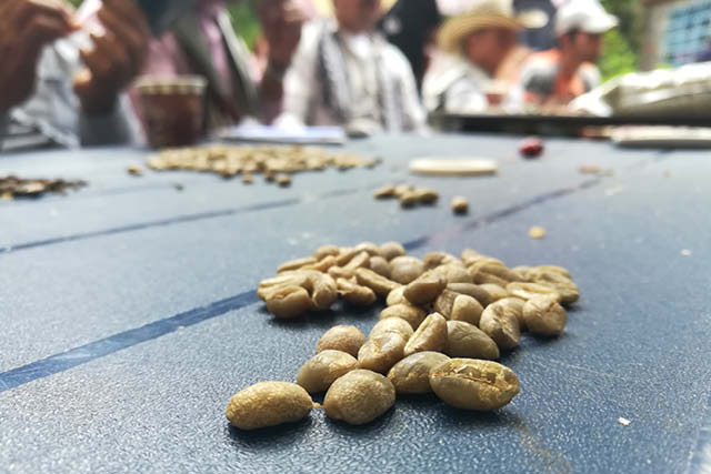 samples being graded in colombia
