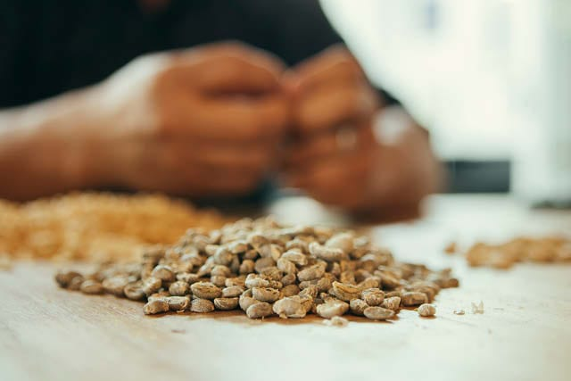 coffee beans on table being graded