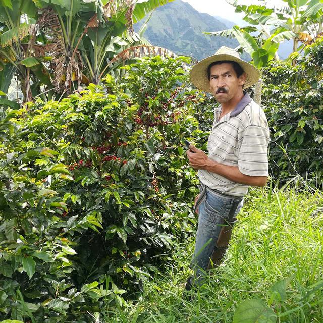 coffee producer at farm
