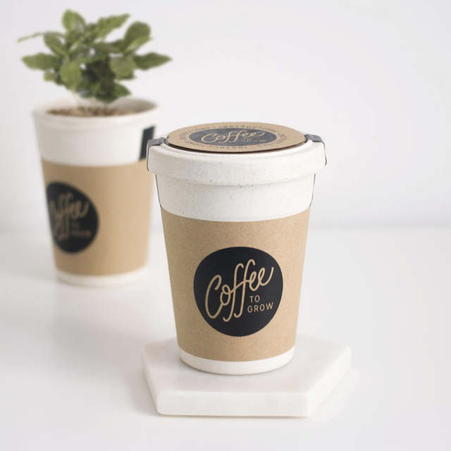 A coffee plant growing in a disposable coffee cup.