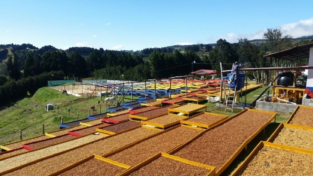honey coffees dries on raised beds painted blue, red, and yellow
