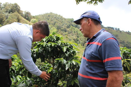 productores revisan un cafeto en Huila