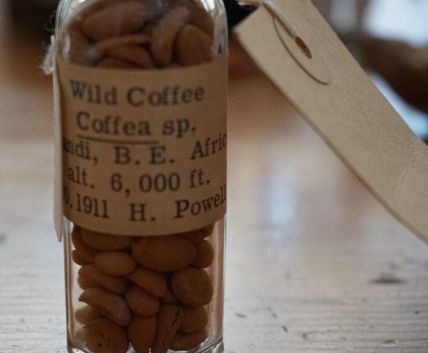 wild coffee sample