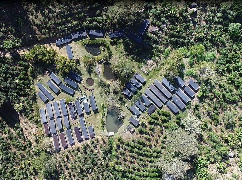 aerial view of coffee farm