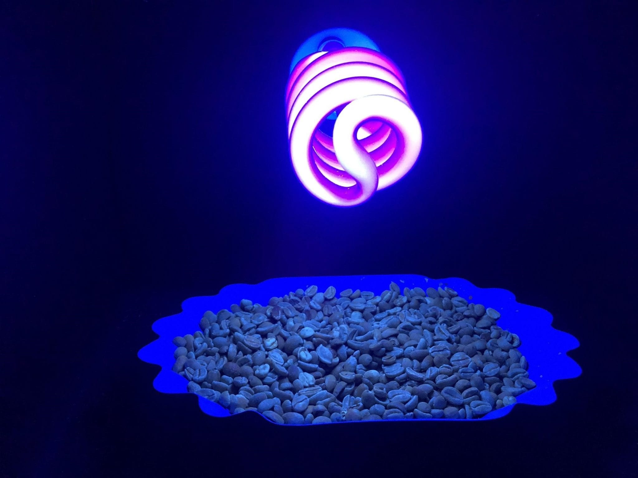 Quality control of green coffee beans using a UV light