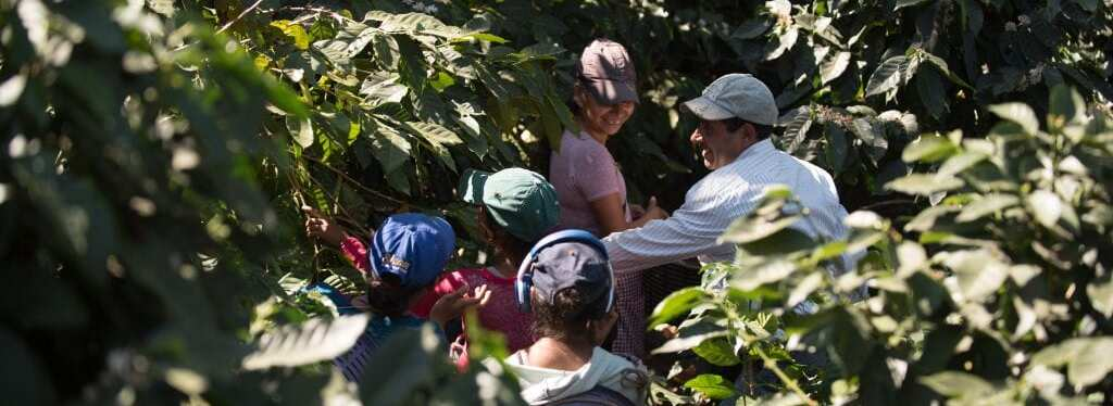 Coffee producers working in their crop