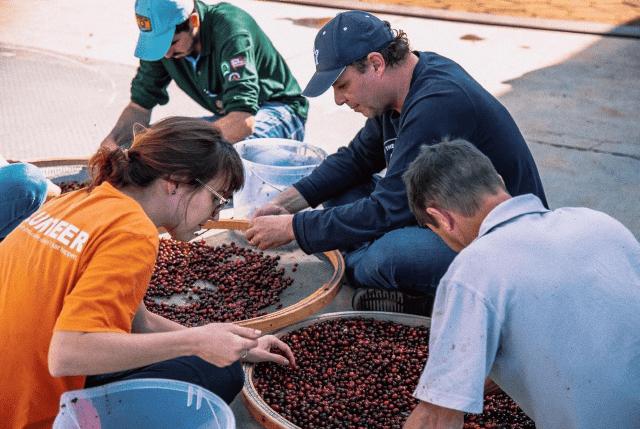 Classificação de cerejas de café durante uma aula de Q-processing em Minas Gerais, Brasil.