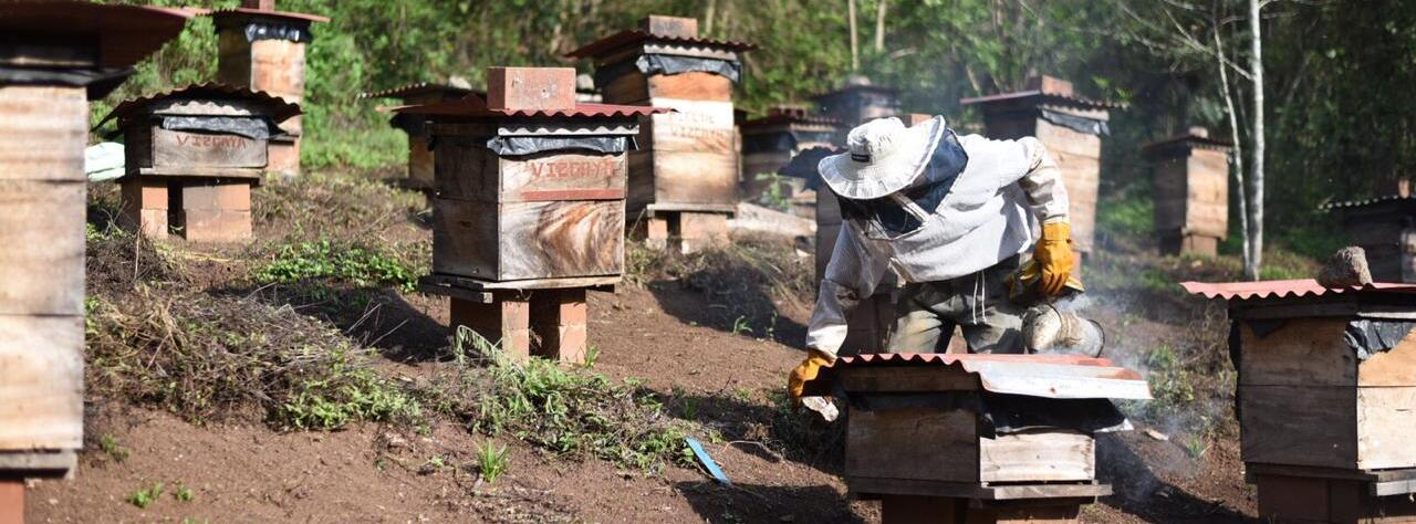 Apiary in a coffee farm