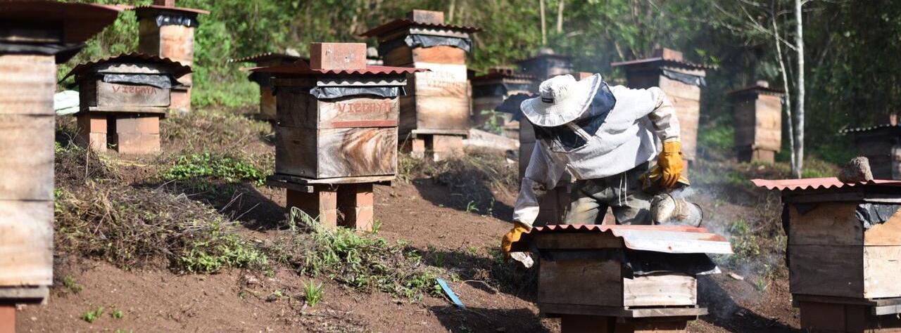 Apiary in a coffee farm