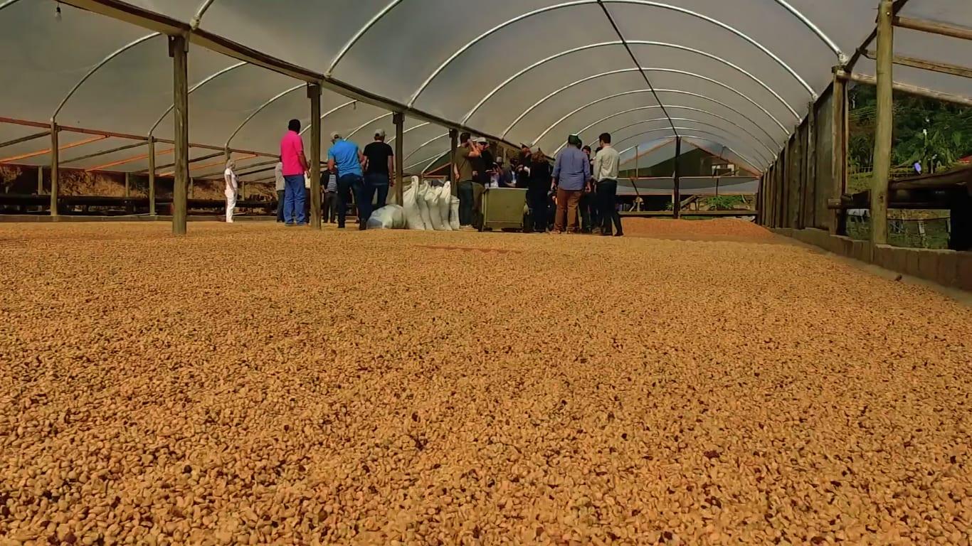 Ally Coffee origin trip – coffee drying in Brazil