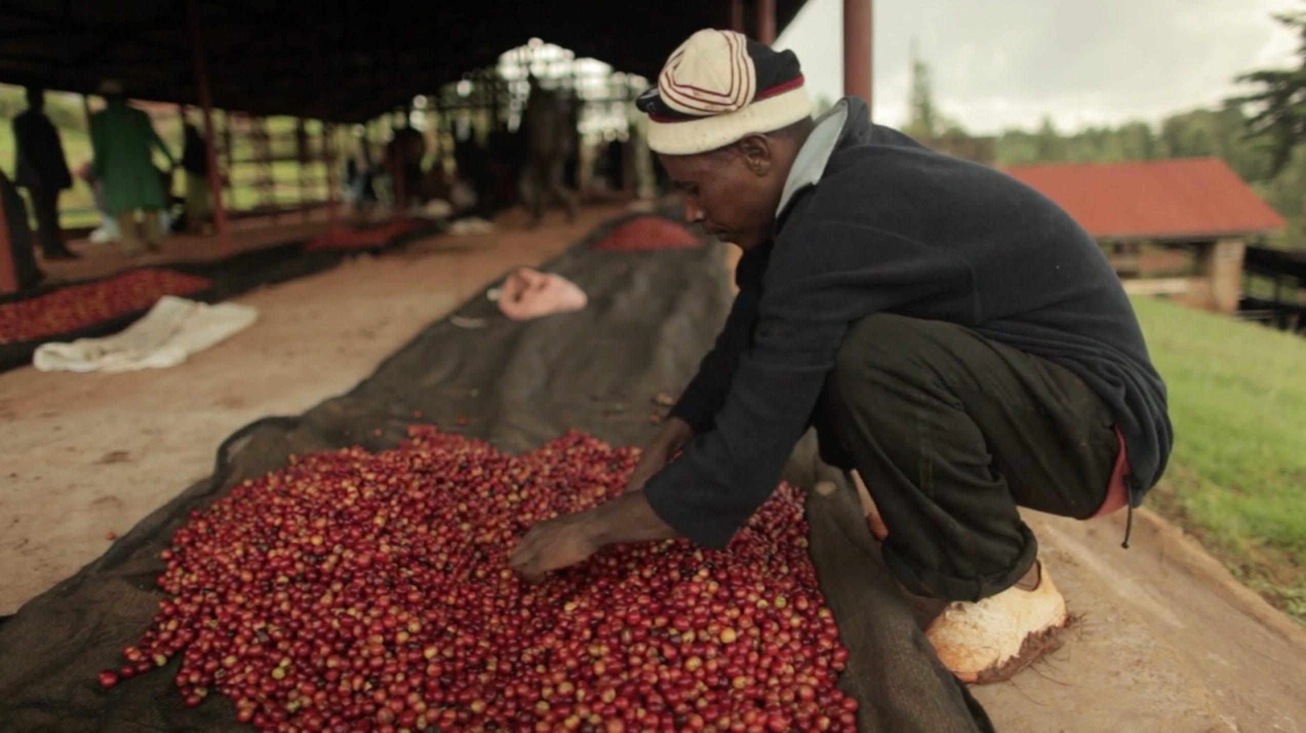 kenya microlot coffee farmer
