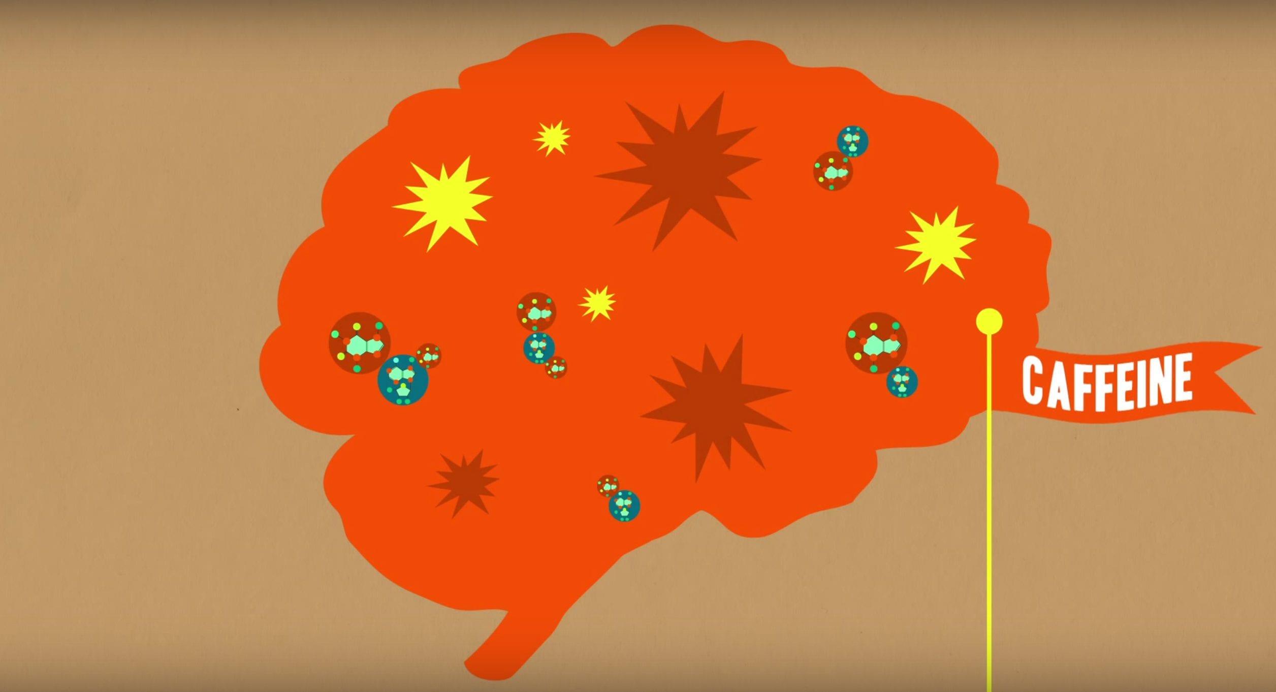 caffeine affect on brain