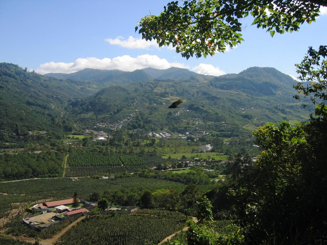 A coffee farm at high altitude