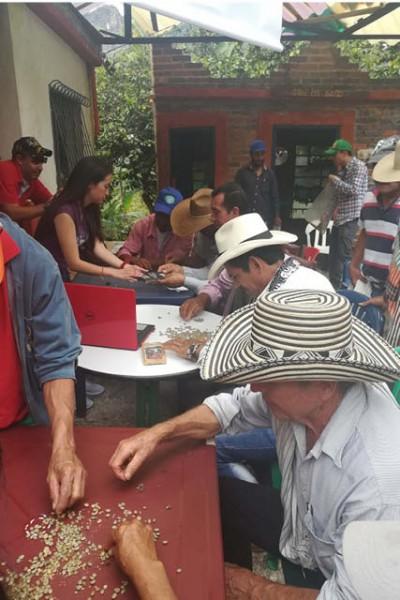 produtores catando café