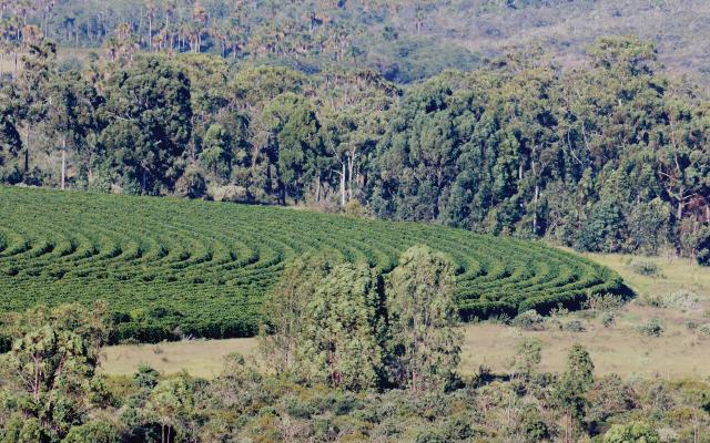 Vista aérea da Propriedade Ecoagrícola de Café Especial na Serra do Cabral, Minas Gerais, Brasil.