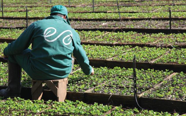 Um fazendeiro inspeciona as plantas em uma enfermaria, na Propriedade Ecoagrícola de Café Especial na Serra do Cabral, Minas Gerais, Brasil.