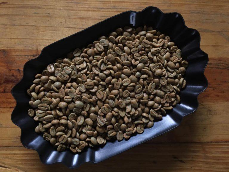 Amostras de grãos de café verde.