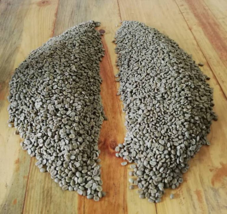 Uma amostra de grãos de café divididos em dois como parte do método de cone.
