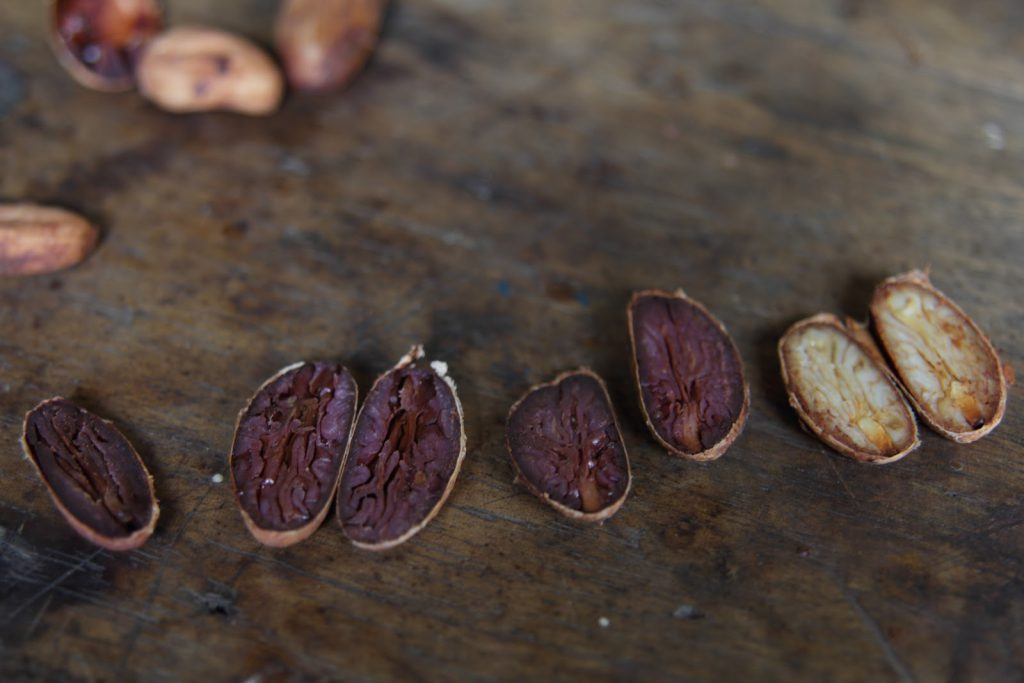 Fine cacao beans split down the middle