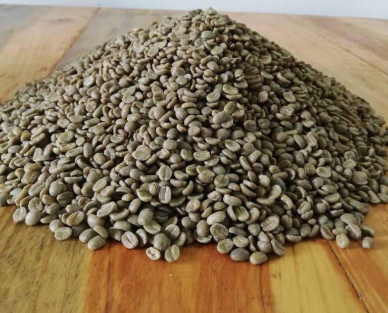 Uma amostra de grãos de café verde.