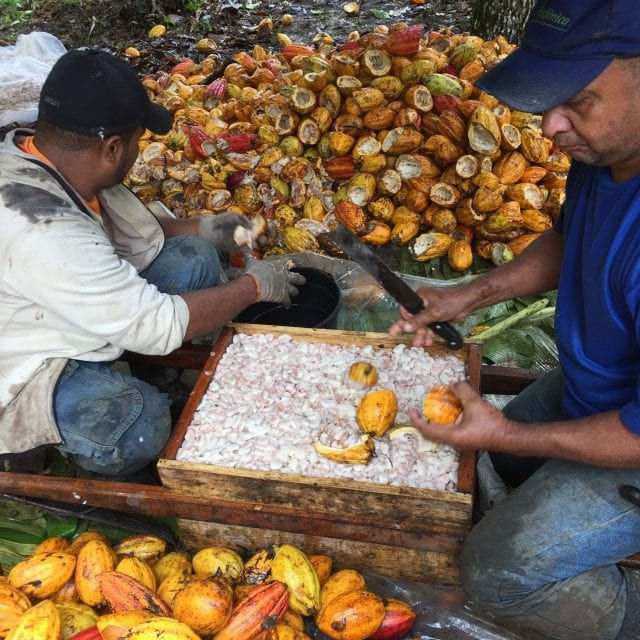 Cacao producers