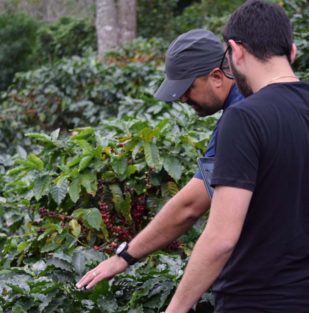 Producers inspect coffee trees at a farm