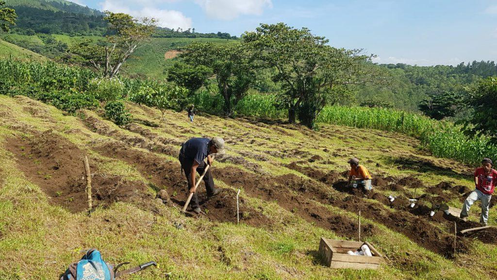 Productores de cafe en el Trabajo en Guatemala