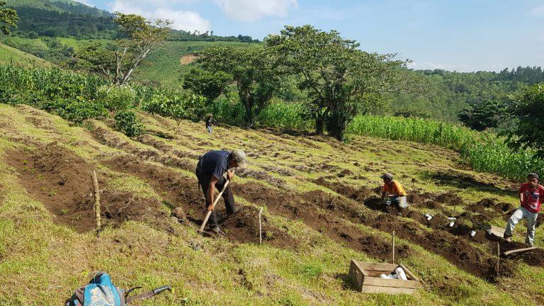 Produtores de café trabalhando na Guatemala.
