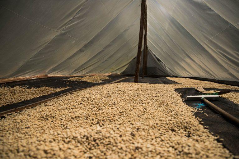 Secagem de café em uma fazenda na Colômbia.