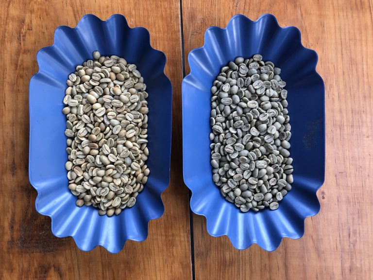 Amostras de cafés lavados e processados naturais.