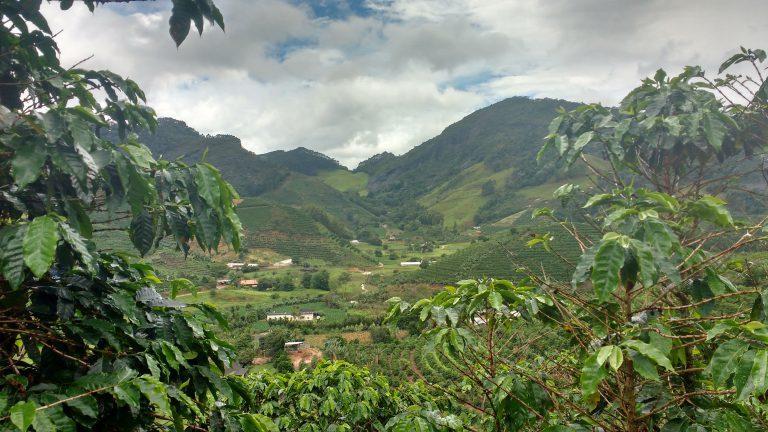 Uma fazenda de café no Espírito Santo, Brasil. Crédito: Ivan Petrich