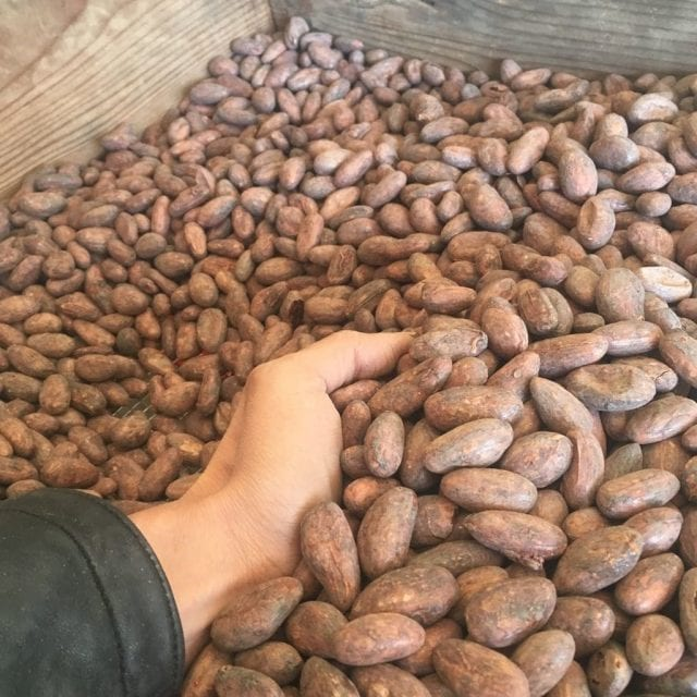 Roasted cacao