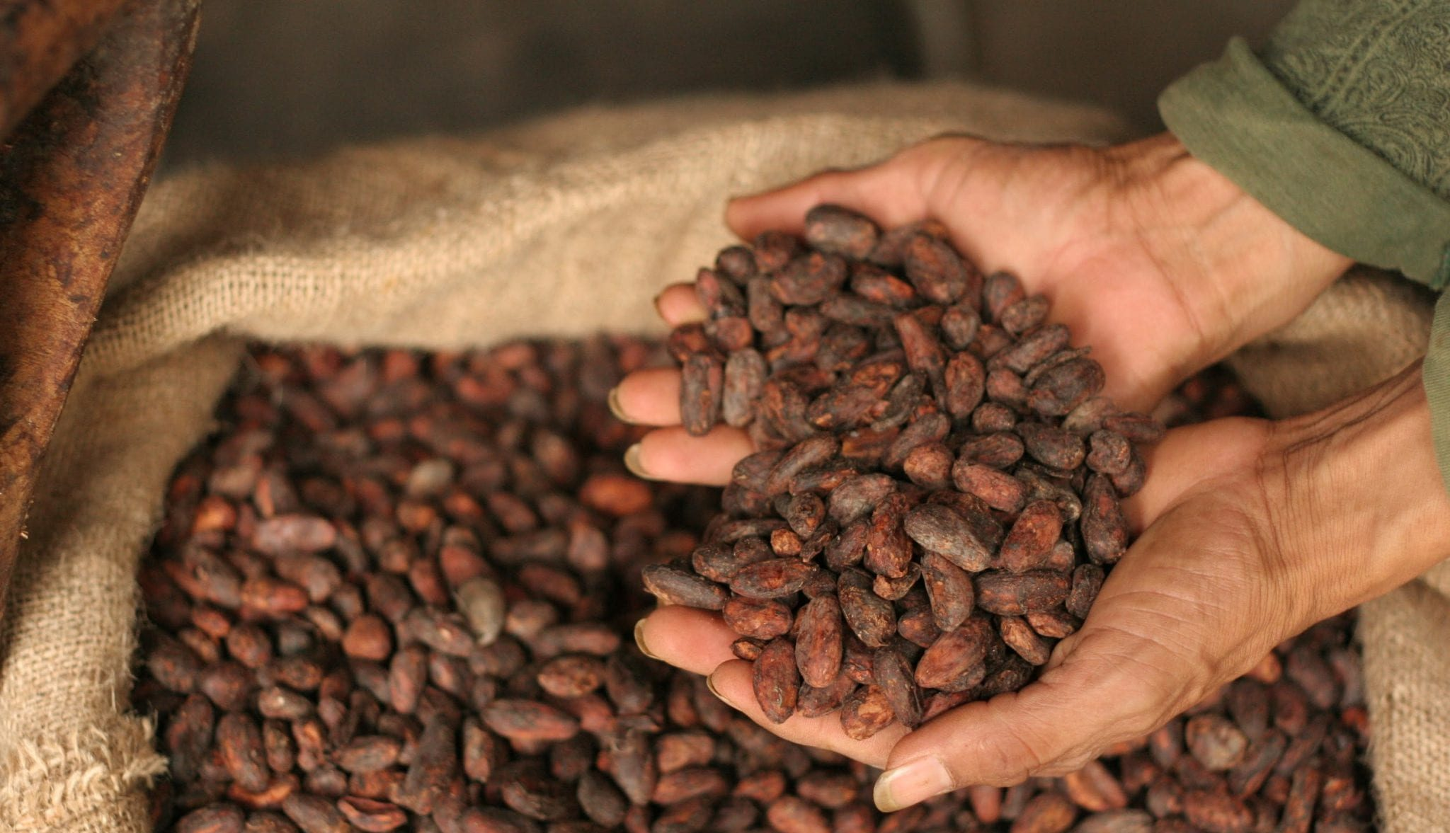 How to Roast Fine Cacao: A Beginner's Guide - Perfect Daily Grind