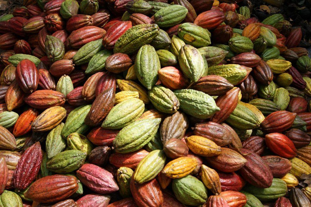 El Mito de Las 3 Variedades de Cacao - Perfect Daily Grind Español