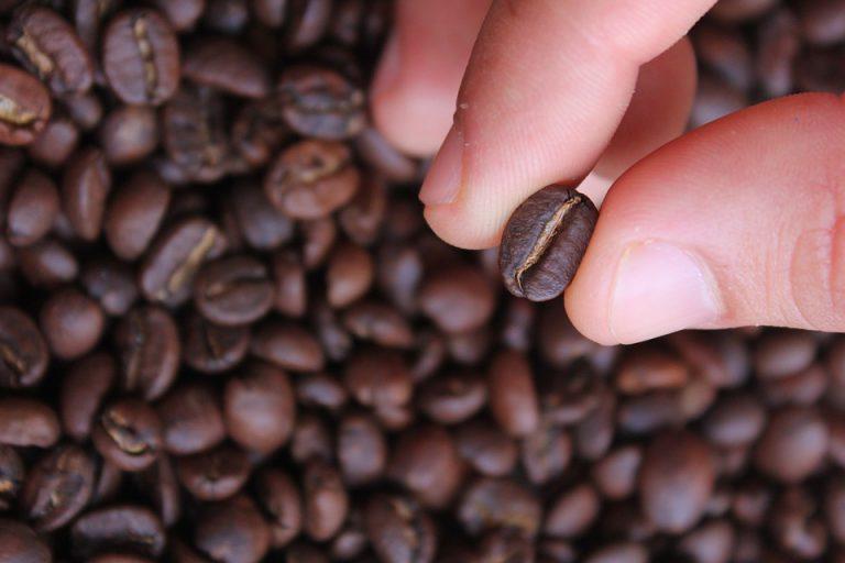 Grãos de café torrados.