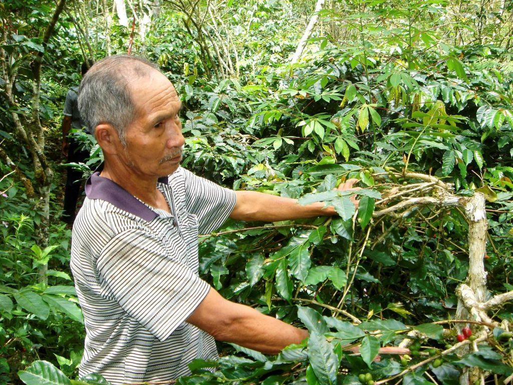 productor de cafe enn indonesia