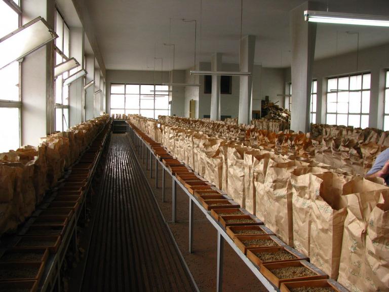 Uma sala de amostras na Nairobi Coffee Exchange, Quênia.