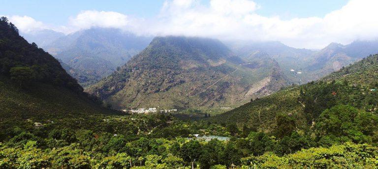 Uma vista das plantações em Finca El Injerto, Guatemala.