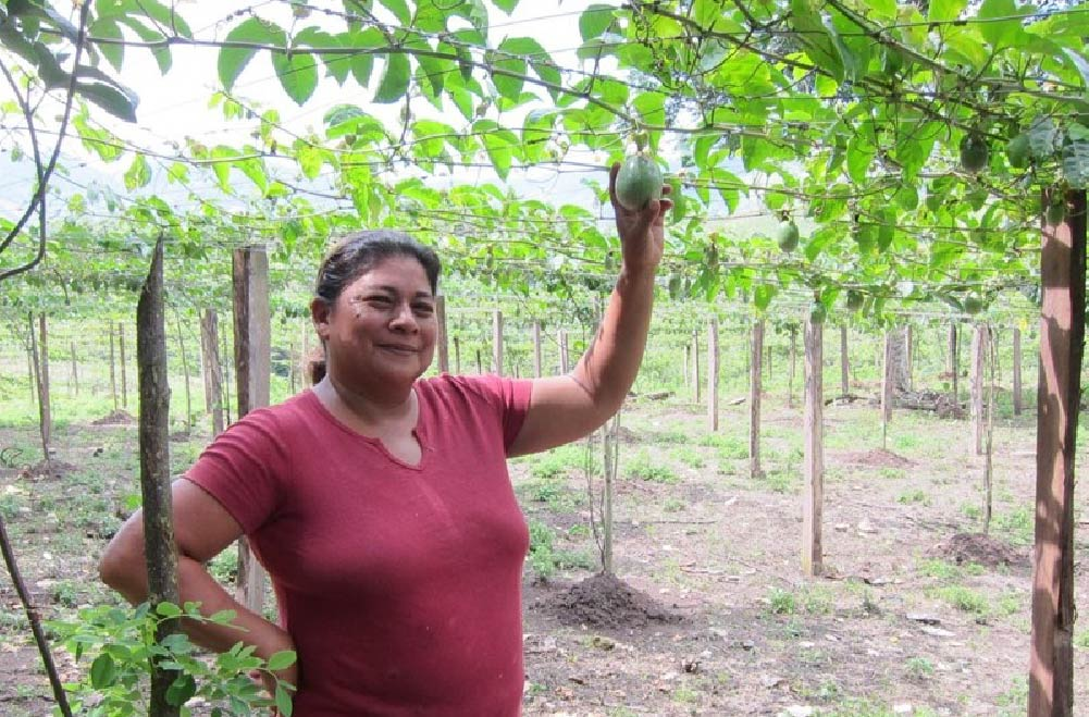 Nicaraguan coffee producer Juana Valle and her passion fruit plants.