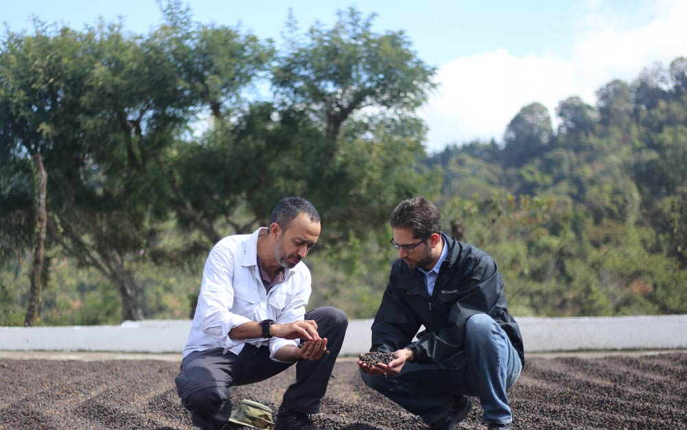 Prucer and buyer checking dried coffee cherries