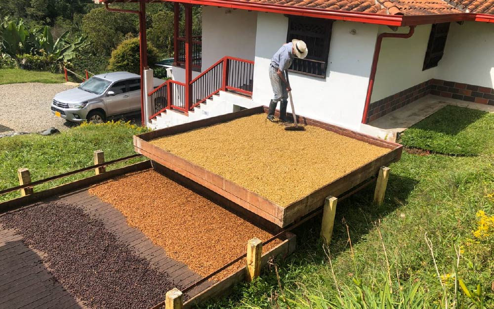 Diego Maya of Finca Los Frailes. Antioquia municipio de Fredonia