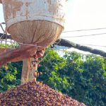 Producer pulping coffee cherries
