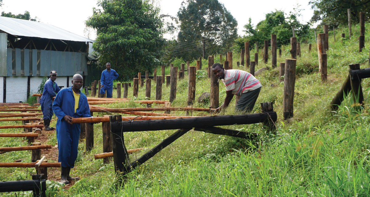 Raised beds being built at a mill in Africa