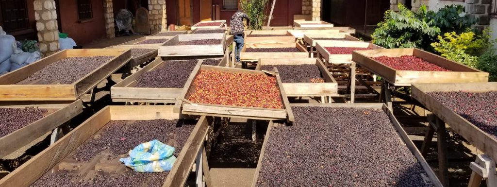 Drying beds with natural coffee